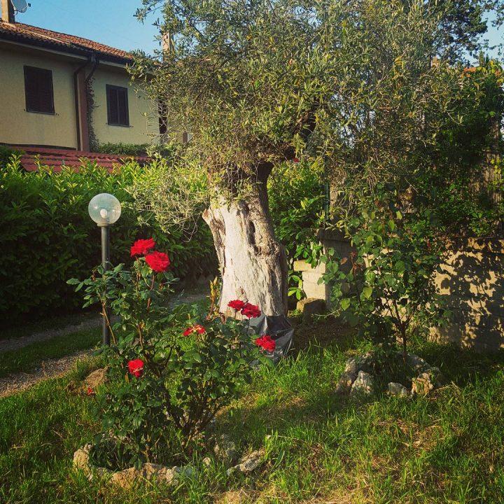 B&B Pianoscarano giardino